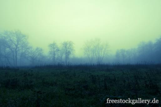 Nebel in der Natur