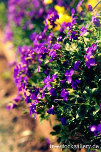 garten blumen lila, lila blumen im garten - kostenlose bilder, Design ideen