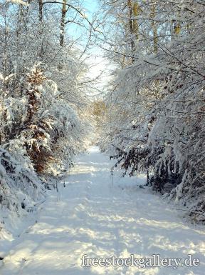 Weg Im Schnee Winterbild Im Wald Kostenlos