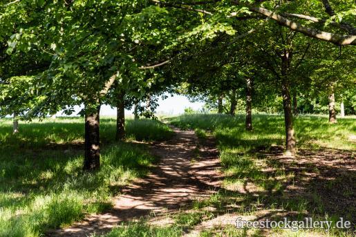 Weg In Der Natur Mit Bäumen Kostenlose Bilder Download