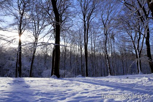 Winter Im Wald Gratis Bild Zum Herunterladen