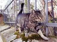 Tiere Kostenlose Bilder Zum Download Freestockgallery